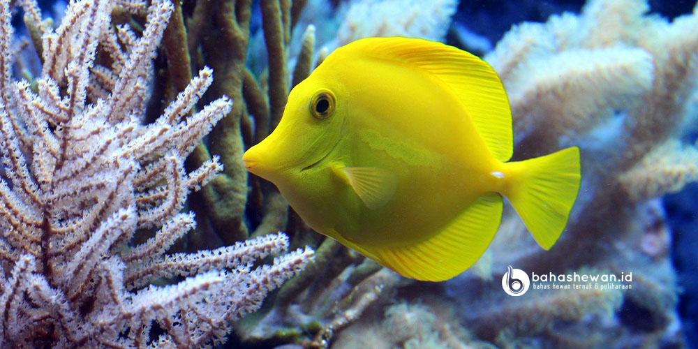 Aksesoris Aquarium Ikan Hias