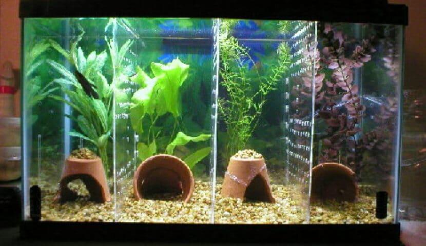 Aksesoris aquarium ikan hias dari barang bekas