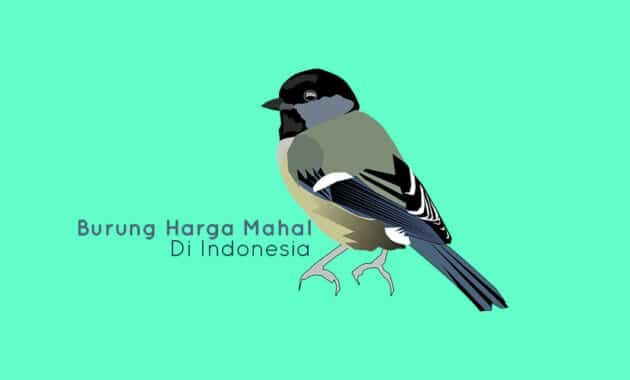 Burung mahal di indonesia