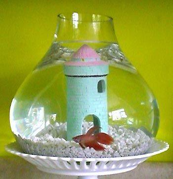 ide botol untuk ikan cupang