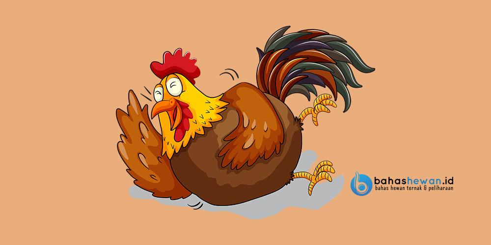 Bodrex Flu dan Batuk untuk ayam ngorok